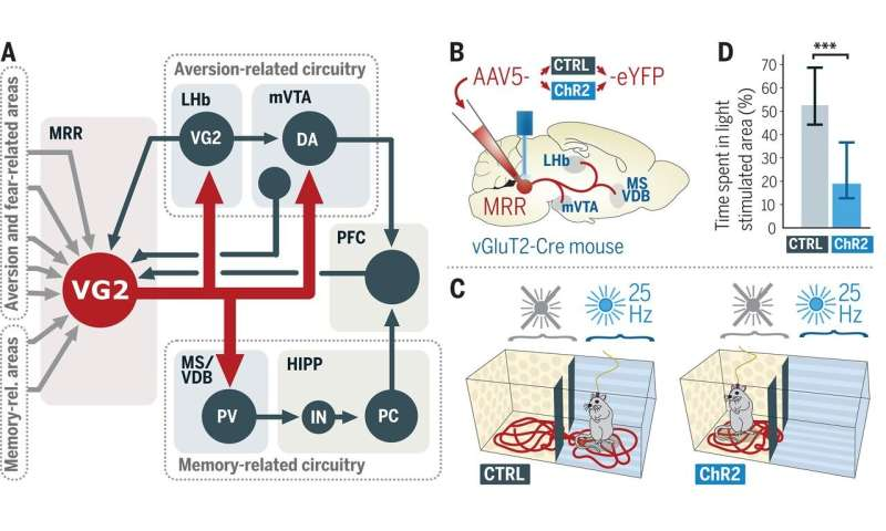 Hub in the brainstem found to regulate ability of mice to evaluate, process and memorize negative experiences