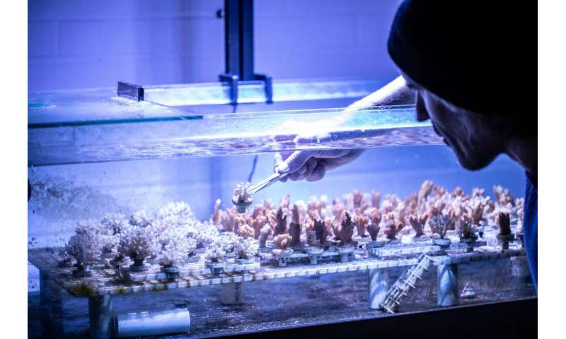 For some corals, meals can come with a side of microplastics