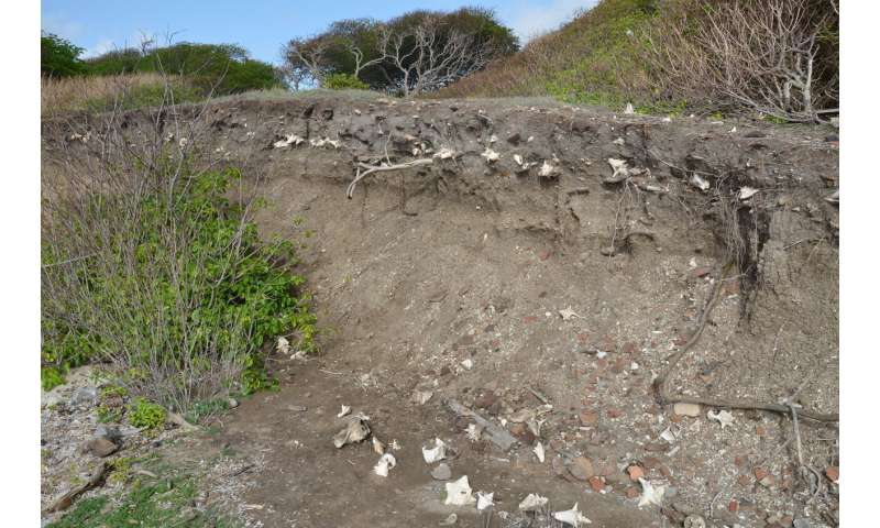 Caribbean settlement began in Greater Antilles, researchers say