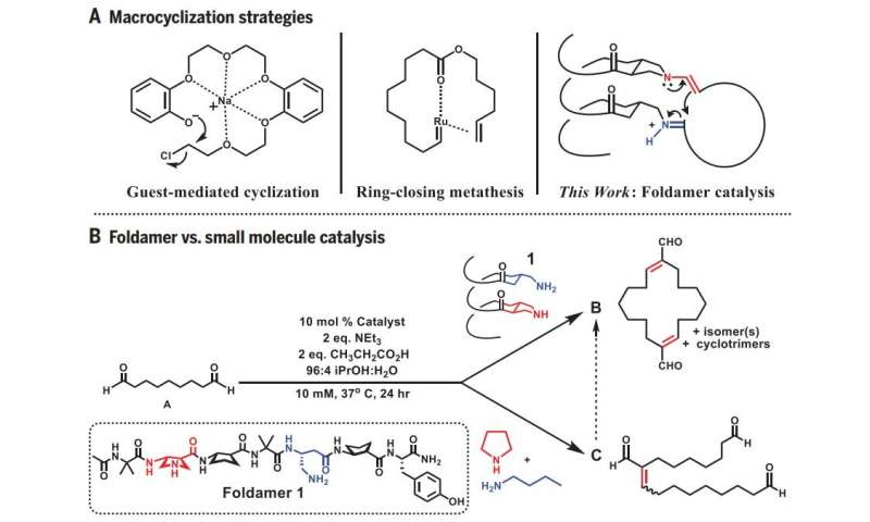 Mimicking enzymes, chemists produce large, useful carbon rings