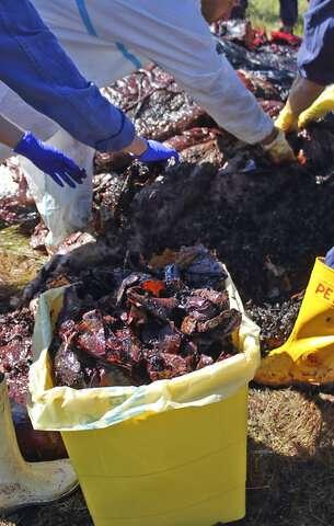 Explorer to trace flow of plastics down 10 rivers into seas