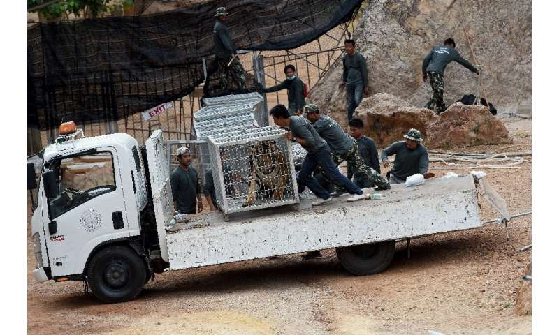 More than half the 147 tigers removed from a Thai temple since 2016 over fears of mistreatment have died, officials say