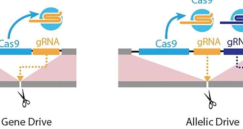 Next-generation gene drive arrives