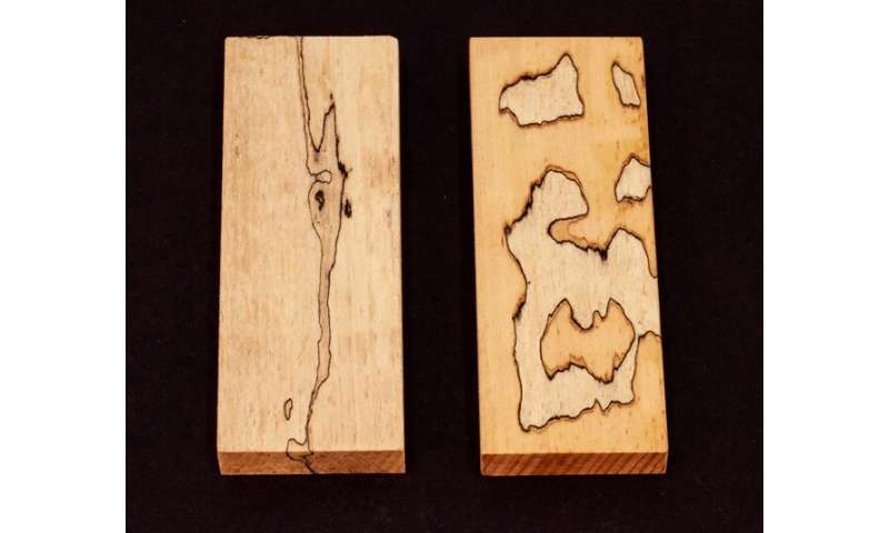 Researcher uses decomposition fungi to create patterns in wood