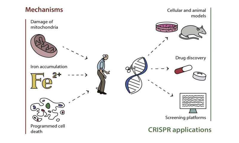 Scientists listed ways of applying genetic engineering to treat Parkinson's disease