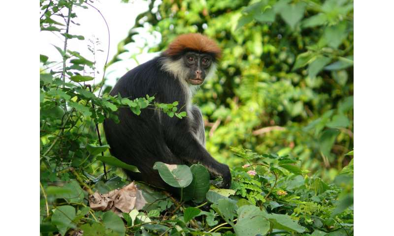 Tanzania forest to be protected as a result of major scientific discoveries