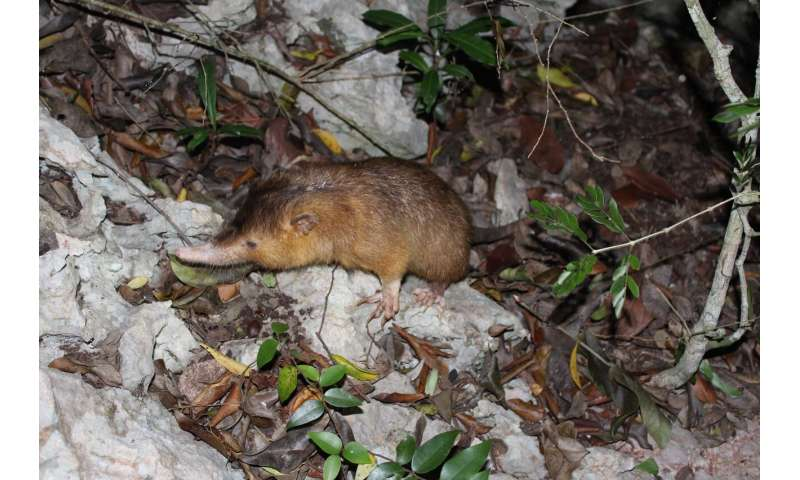 Unravelling the venomous bite of an endangered mammal