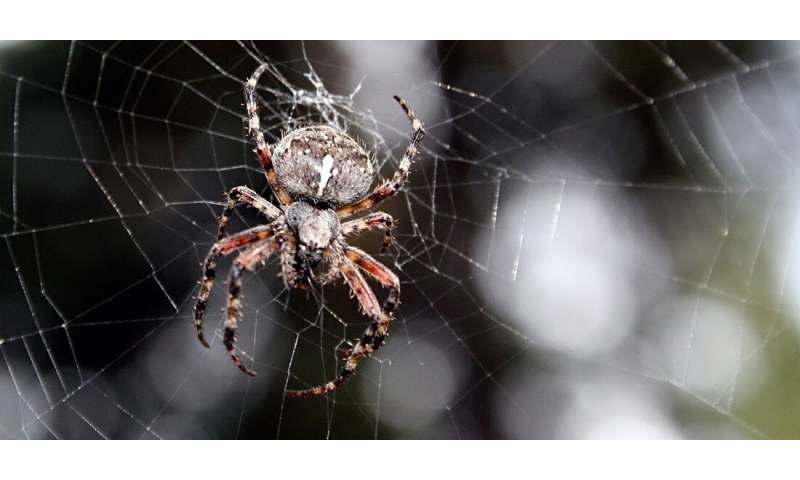 Why you shouldn't kill your friendly neighbourhood spiders