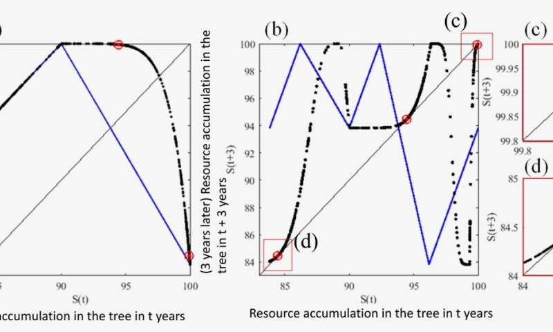Understanding the mechanisms of seemingly chaotic synchronization in trees