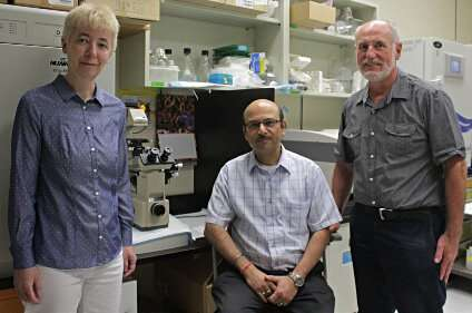 Researchers find elusive protein that could be key to eliminating neglected tropical diseases