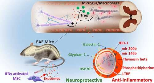 Nanotechnology treatment shows promise against multiple sclerosis
