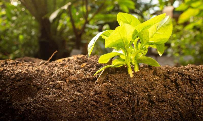 Study identifies way to enhance the sustainability of manufactured soils