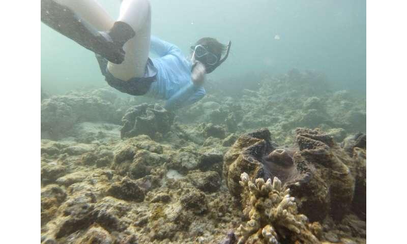 The surprising merit of giant clam feces