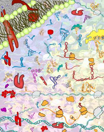 Uncovering the principles behind RNA folding