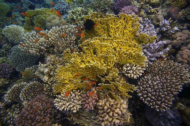 Climate change could make corals go it alone