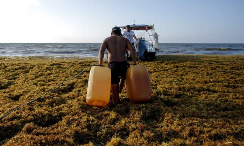 Mexico's prized beaches threatened by smelly algae invasion