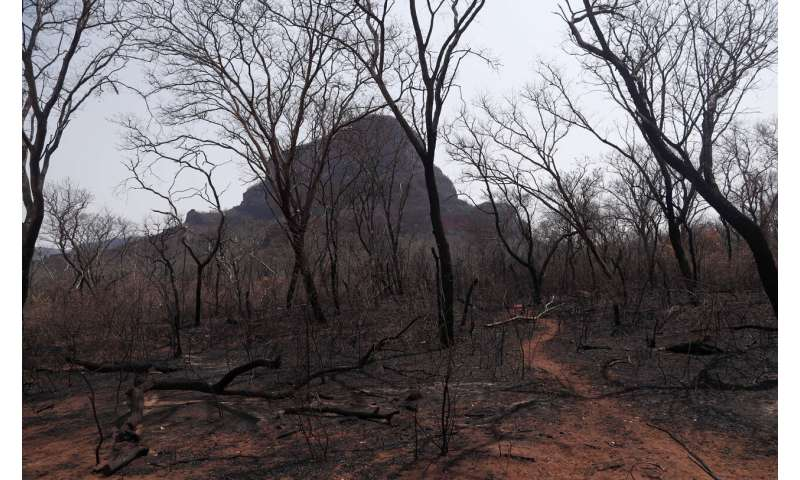 Respiratory ailments rise in Brazil as Amazon fires rage