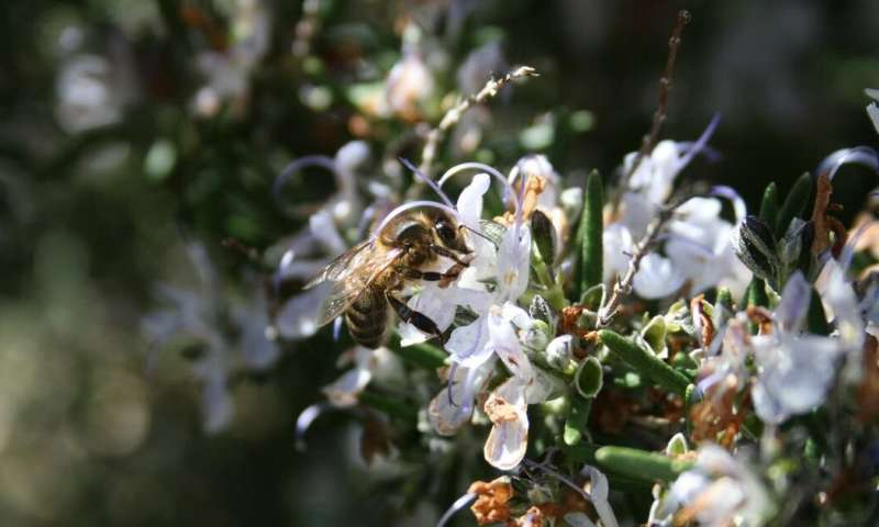 Climate change: bees are disorientated by flowers' changing scents