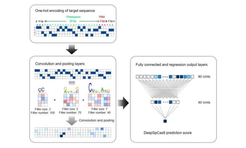 A deep learning-based model DeepSpCas9 to predict SpCas9 activity