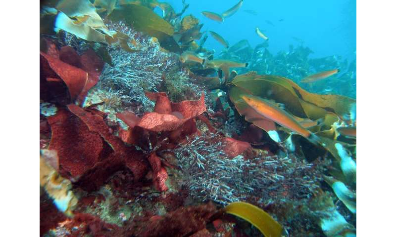 Biodiversity is key to kelp forest health