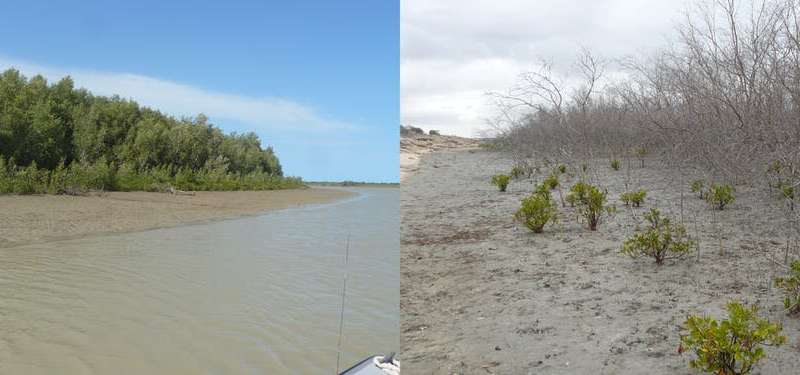 Extreme weather caused by climate change has damaged 45% of Australia's coastal habitat