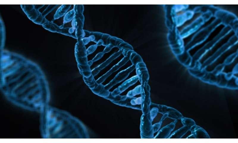 New mechanisms describe how the genome regulates itself