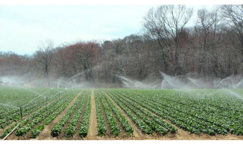 Researchers aim to demystify complex ag water requirements for Produce Safety Rule