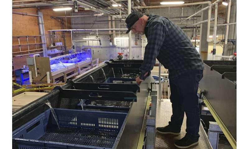 Sea urchin explosion off California, Oregon decimates kelp