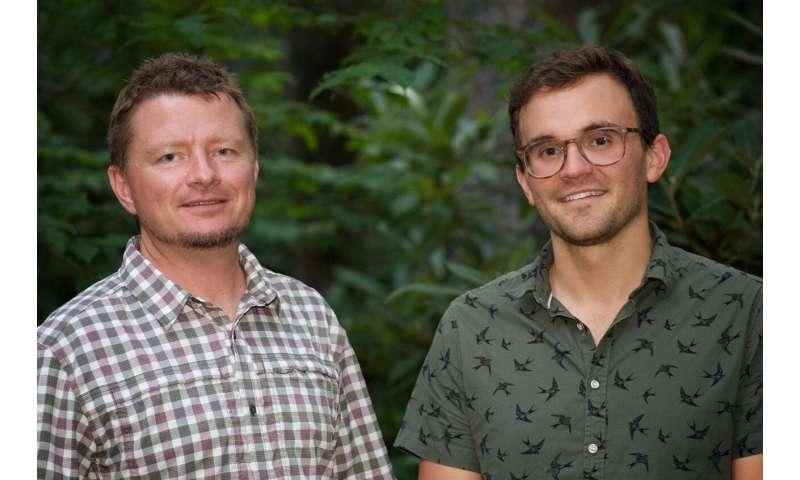 Study shows how salamanders harness limb regeneration to
