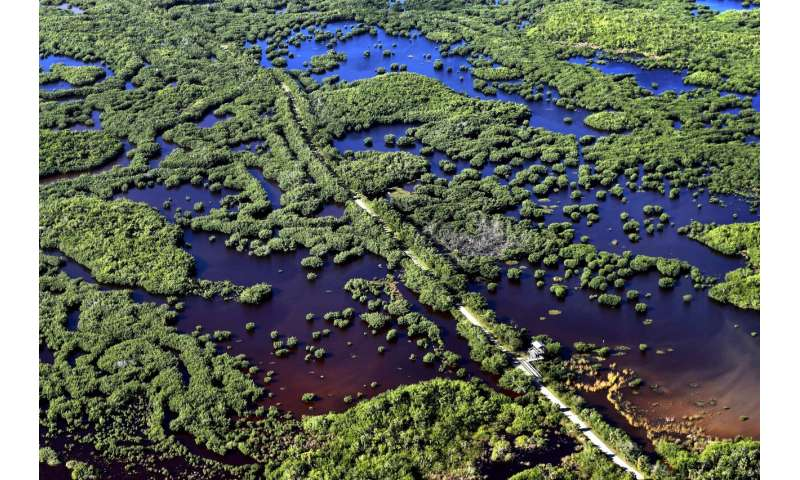 To save Everglades, guardians fight time -- and climate