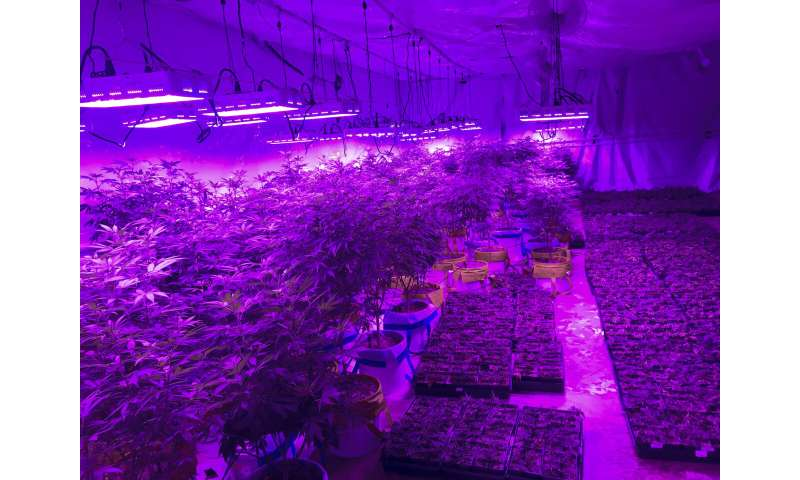Utah farmers and entrepreneurs compete to grow medical pot