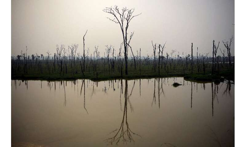 A burnt area of the Amazon rainforest is pictured near Abuna, Rondonia state, Brazil, on August 24, 2019