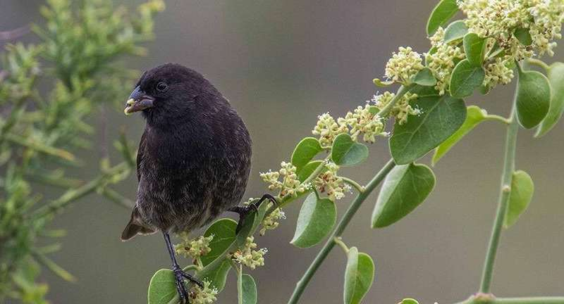 A decade after the predators have gone, Galapagos Island finches are still being spooked