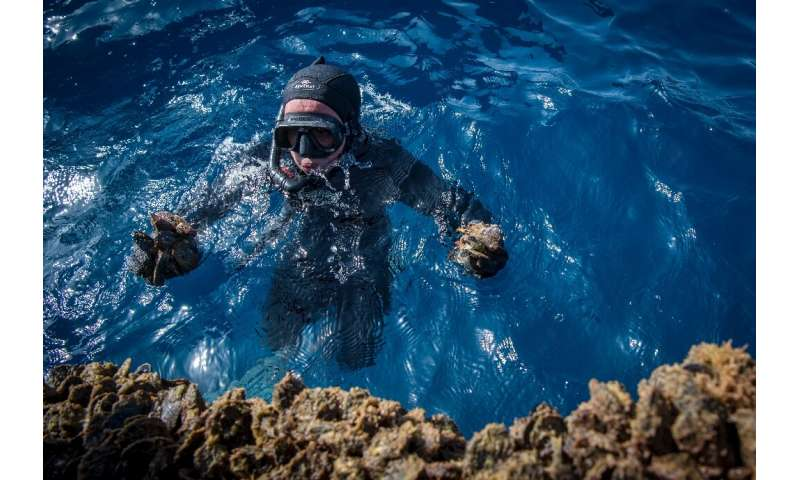 A diver gathers mussels in a farm off the coast of the port city of Nador in Morocco