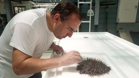 A dreadful discovery about the crown-of-thorns starfish contains a silver lining for the Great Barrier Reef