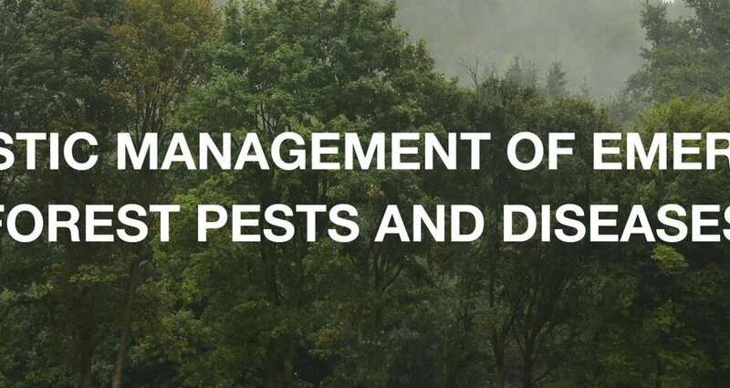 Advanced detection tool to limit the spread of devastating tree pathogens