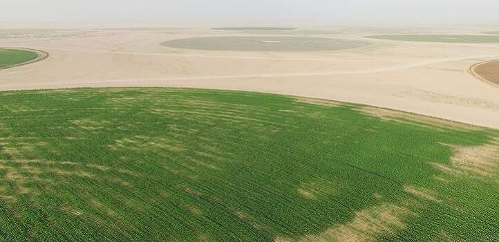 Aerial imaging of plant heights could help farmers manage field crops more effectively