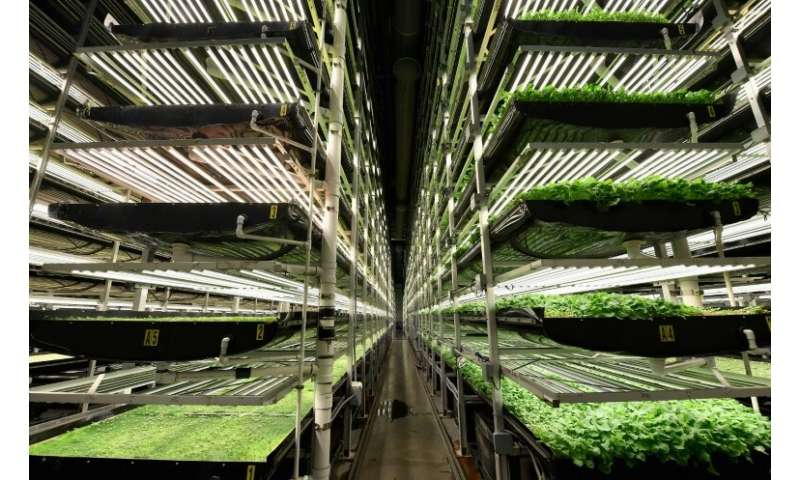 AeroFarms's vertical grow towers in Newark, New Jersey