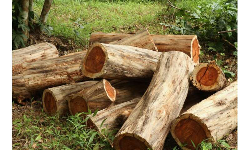 Africa's Mukula trees score a victory as trade is put under closer scrutiny