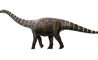 A high–heeled dinosaur?