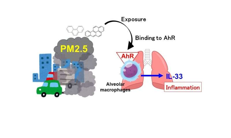 Airborne particles can send our detox systems into overdrive