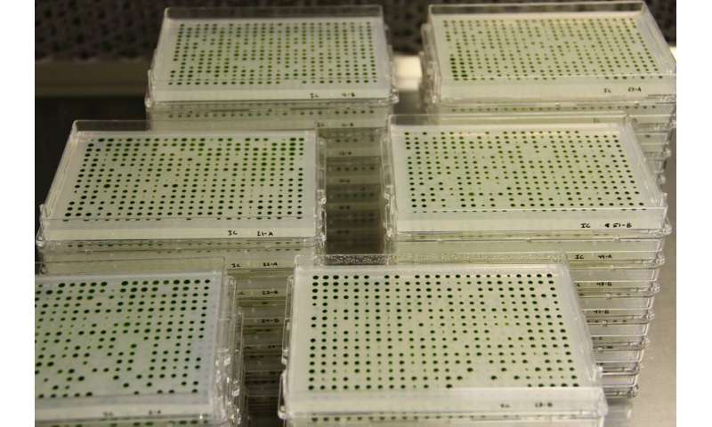 Algal library lends insights into genes for photosynthesis