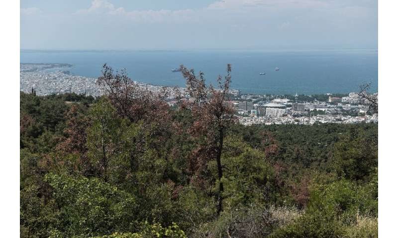 Almost ten percent of pine trees at the Seich Sou forest overlooking Thessaloniki had been destroyed by larvae of the Tomicus pi
