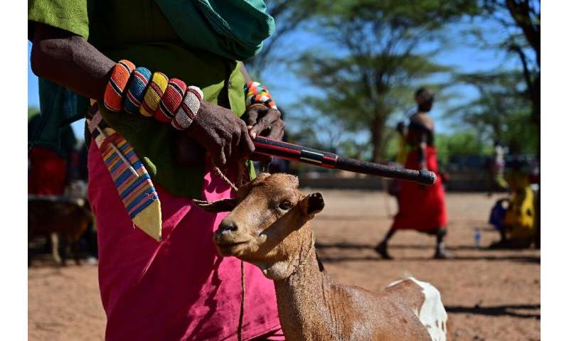 A long dry spell can set a pastoral family back years and erode their capacity to handle future shocks, the UN's Food and Agricu
