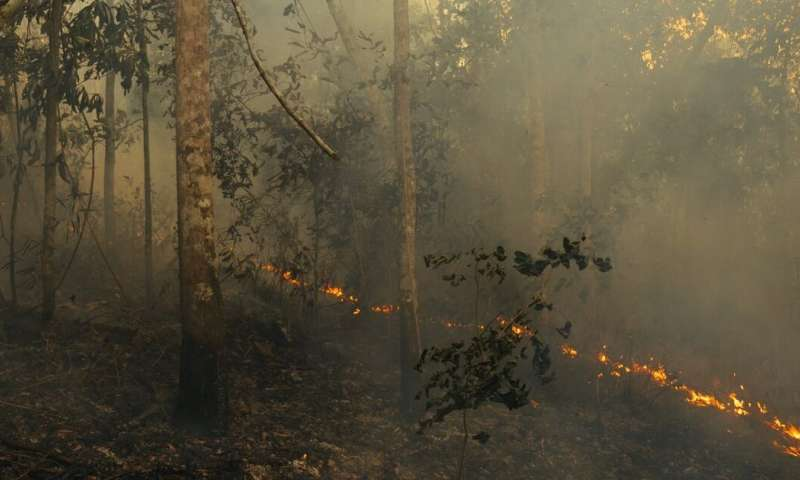 Amazon fires explained: what are they, why are they so damaging, and how can we stop them?
