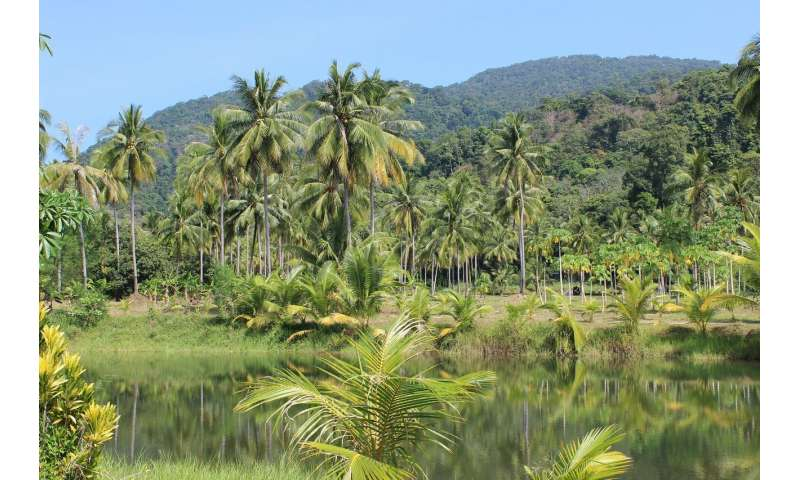 Amazon Forest Can Be Trained By Higher Rainfall Variability