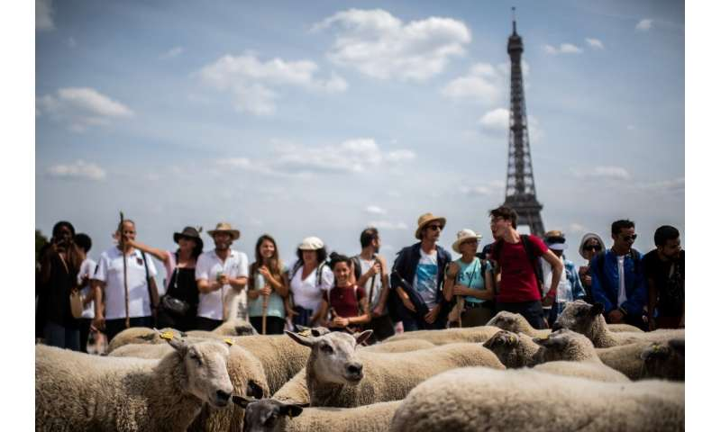 Amused Parisians  snapped pictures of the unusual sight for the capital, some bleating their support