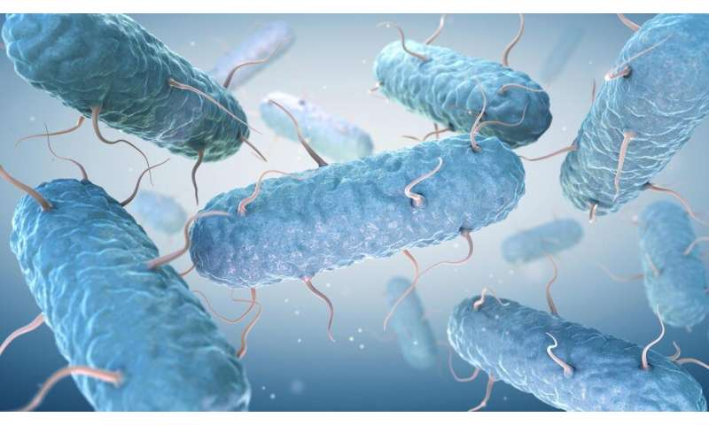 Analyzing gut bacteria more accurately to make diagnosis
