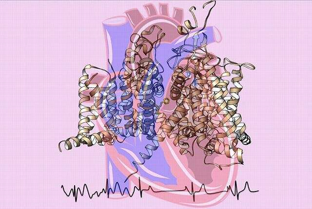 An atomic view of the trigger for the heartbeat