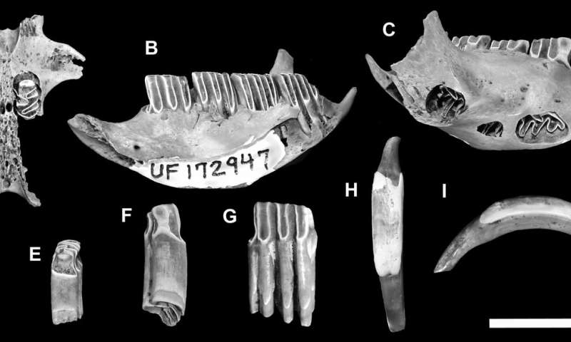 Ancient mammal remains digested by crocodiles reveal new species
